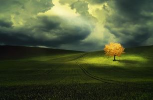Photo free sunset, field, tree