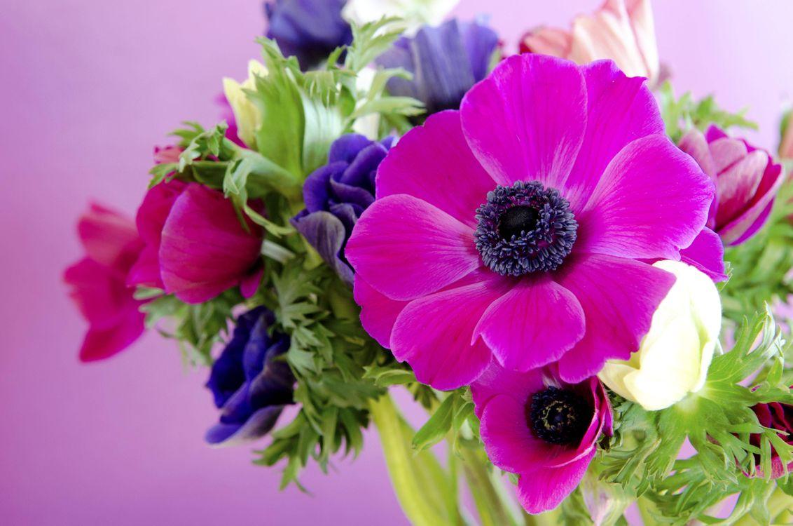 фото цветов букетов на телефон беларуси прогнозируется избыток