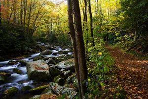 Бесплатные фото осень,лес,деревья,река,камни,дорога,природа