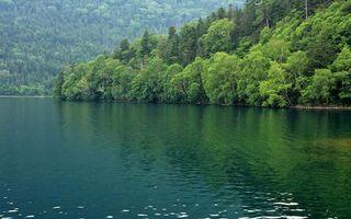 Фото бесплатно лесные деревья, горы, берег