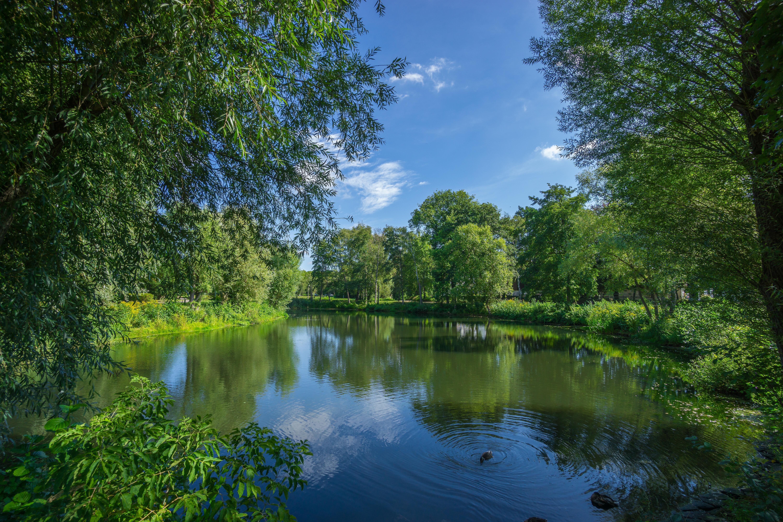 Обои озеро, парк, деревья, пейзаж