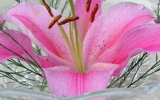 Бесплатные фото цветок,лепестки,розовые,тычинки,трава,ваза