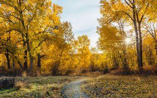 Бесплатные фото осень,парк,дорога,деревья,пейзаж