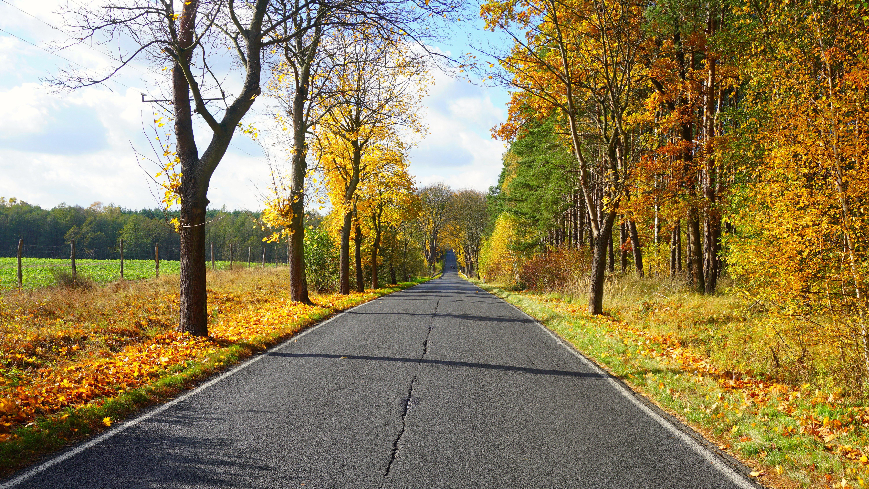 обои осень, деревья, дорога, пейзаж картинки фото