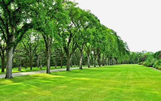 Бесплатные фото парк,аллея,дорожка,деревья,трава,газон