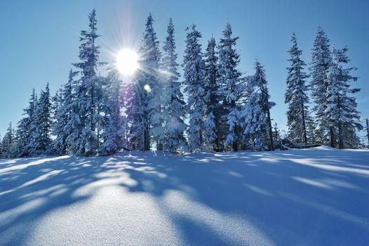 Фото бесплатно зима, снег, деревья, пейзаж