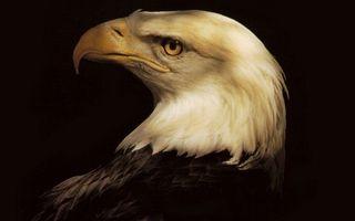 Бесплатные фото орел,белоголовый,берья,клюв,желтый,глаз