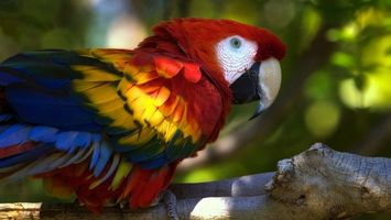 Photo free paws, colored, macaw