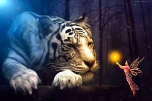 Бесплатные фото тигр,девушка,фея,сюрреализм,фантасмагория,3d,art