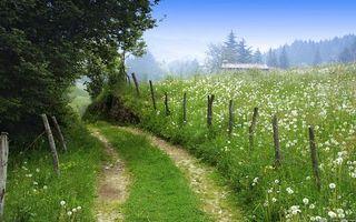 Бесплатные фото загородная дорога,заборчик,проволока,одуванчики