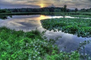 Бесплатные фото закат, река, растения, деревья, цветы, пейзаж