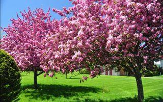 Photo free trees, flowers, grass