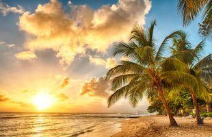 Бесплатные фото закат,море,пальмы,берег,пляж