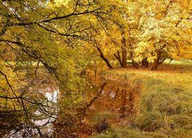 Бесплатные фото осень,лес,парк,деревья,водоём,пейзаж