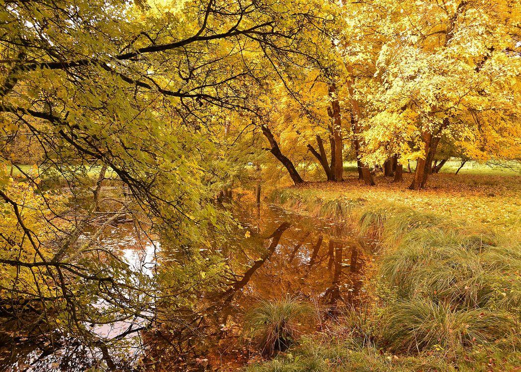 Картинка про деревья, осень