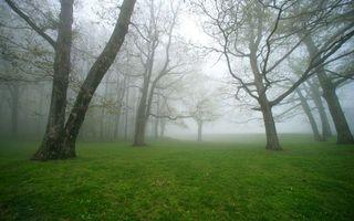 Фото бесплатно трава, зеленая, деревья, стволы, ветки, туман