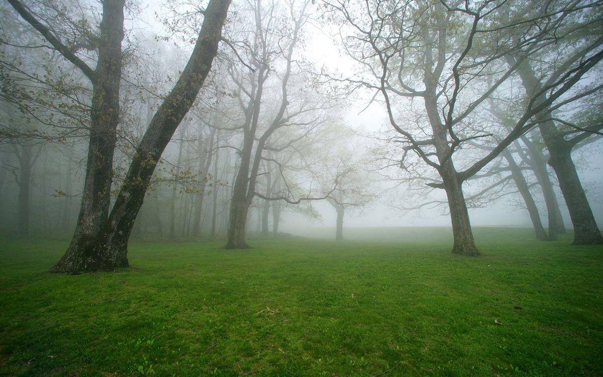 Фото бесплатно ветви, туман, зеленый - на рабочий стол