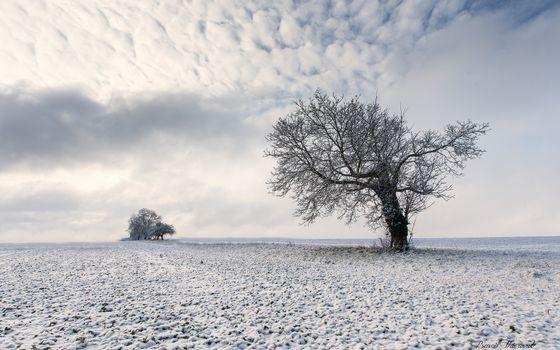 Фото бесплатно Зимнее дерево, снег, облака