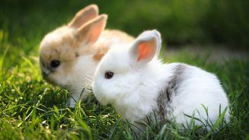 Бесплатные фото кролики,декоративные,морды,уши,шерсть,трава