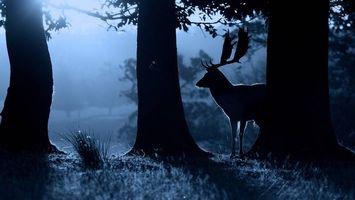 Бесплатные фото ночь,лес,олень,силуэт,рога