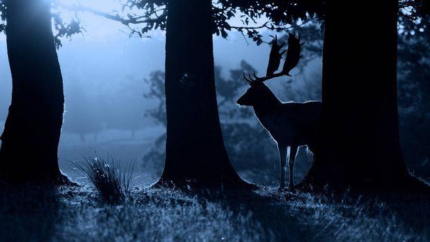Заставки ночь, лес, олень