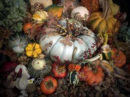Бесплатные фото Композиция,жёлуди,тыква,кукуруза