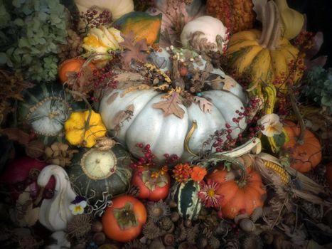 Photo free Composition, Acorns, Pumpkin