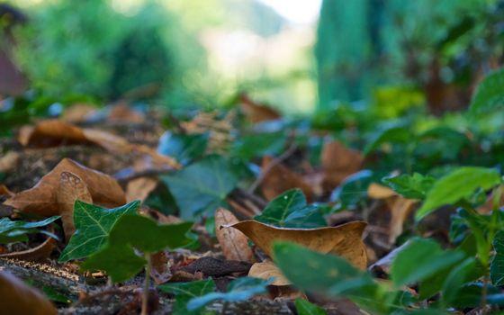 Бесплатные фото земля,листва,зеленая,сухая