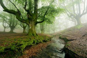 Бесплатные фото лес,деревья,речка,ручей,туман,природа