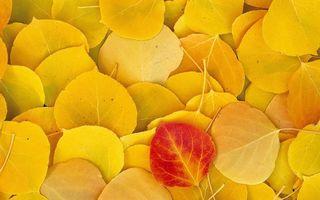 Бесплатные фото листья,желтые,прожилки,природа,заставка