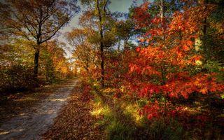Фото бесплатно осенняя тропинка, тропа, листопад