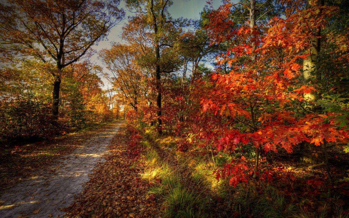 Фото бесплатно осенняя тропинка, тропа, листопад, деревья, осень, дорожка - на рабочий стол