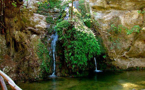 Бесплатные фото скала,камни,растительность,корни,ручей,водопад