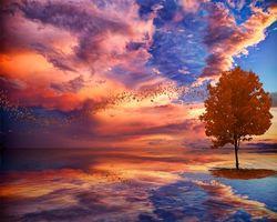 Бесплатные фото закат,море,небо,дерево