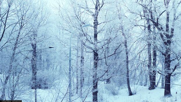 ART IRBIS PRODUCTION, Москва, лес, деревья, парк