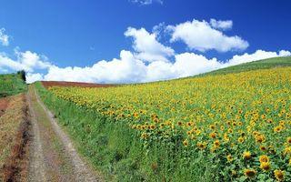 Фото бесплатно холмы, дорога, облака