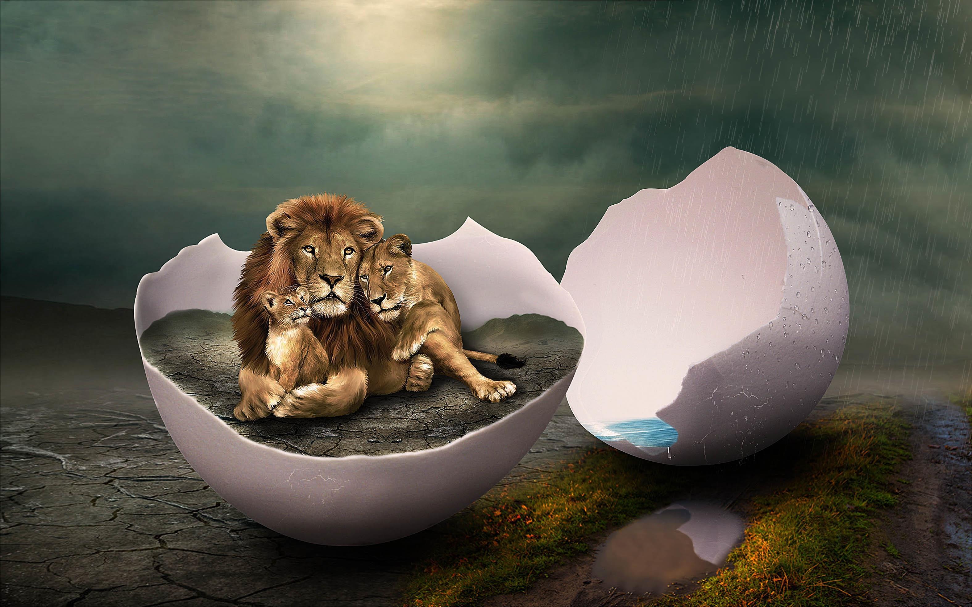 Обои дождь, яйцо, львы