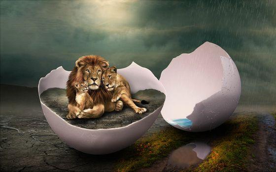Заставки дождь, яйцо, львы