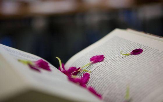 Фото бесплатно книга, страницы, лепестки