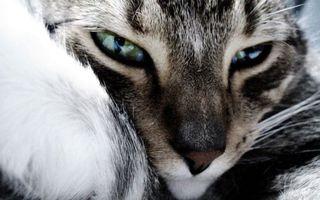 Бесплатные фото кошка,морда,глаза,нос,усы,шерсть
