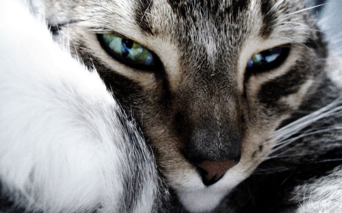 Фото бесплатно кошка, морда, глаза, нос, усы, шерсть, кошки