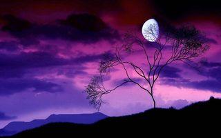 Фото бесплатно ночь, горы, дерево