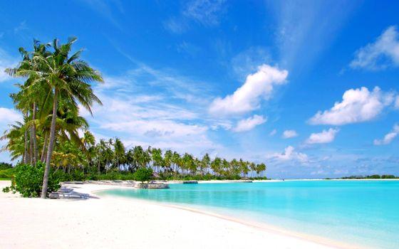 Фото бесплатно песок, пляж, пальмы