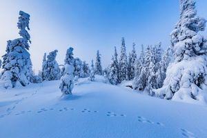 Бесплатные фото Финляндия,зима,снег,сугробы,деревья,пейзаж