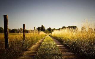 Бесплатные фото дорога полевая,трава,столбики,деревья,небо