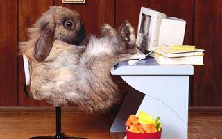Бесплатные фото кролик,офисный работник,стол,компьютер,кресло,документы