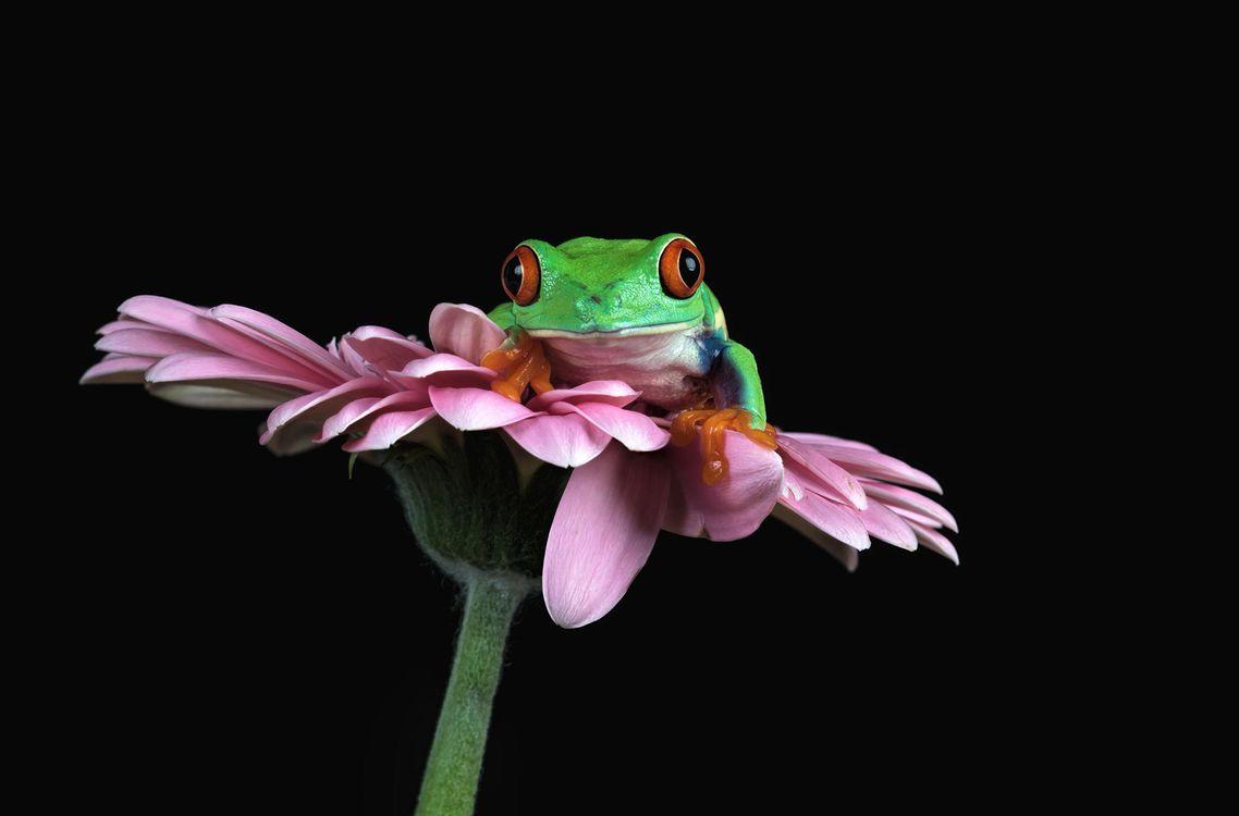 Фото бесплатно цветок, лягушка, лежит на цветке - на рабочий стол