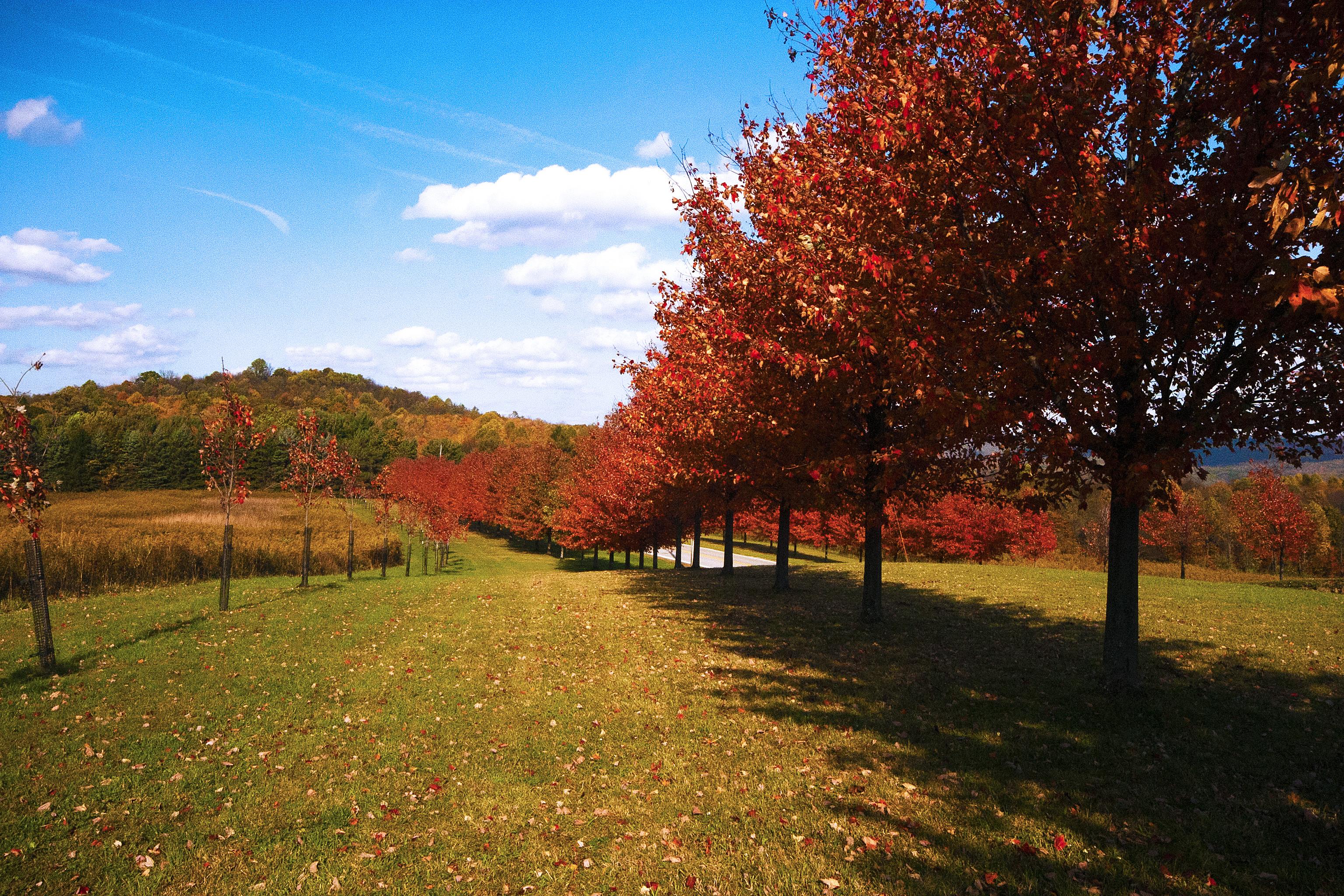 обои осень, поле, холм, дорога картинки фото