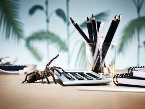 Заставки паук, клавиатура, карандаши