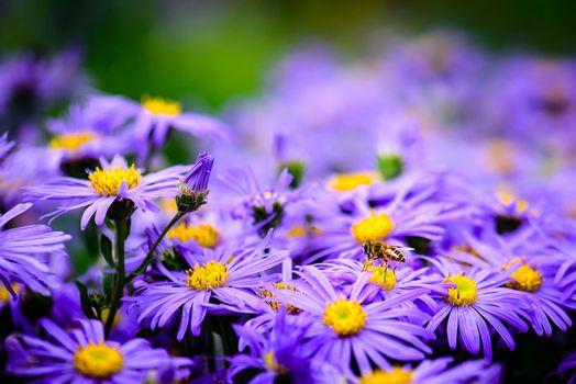Бесплатные фото цветы,муха,флора,макро